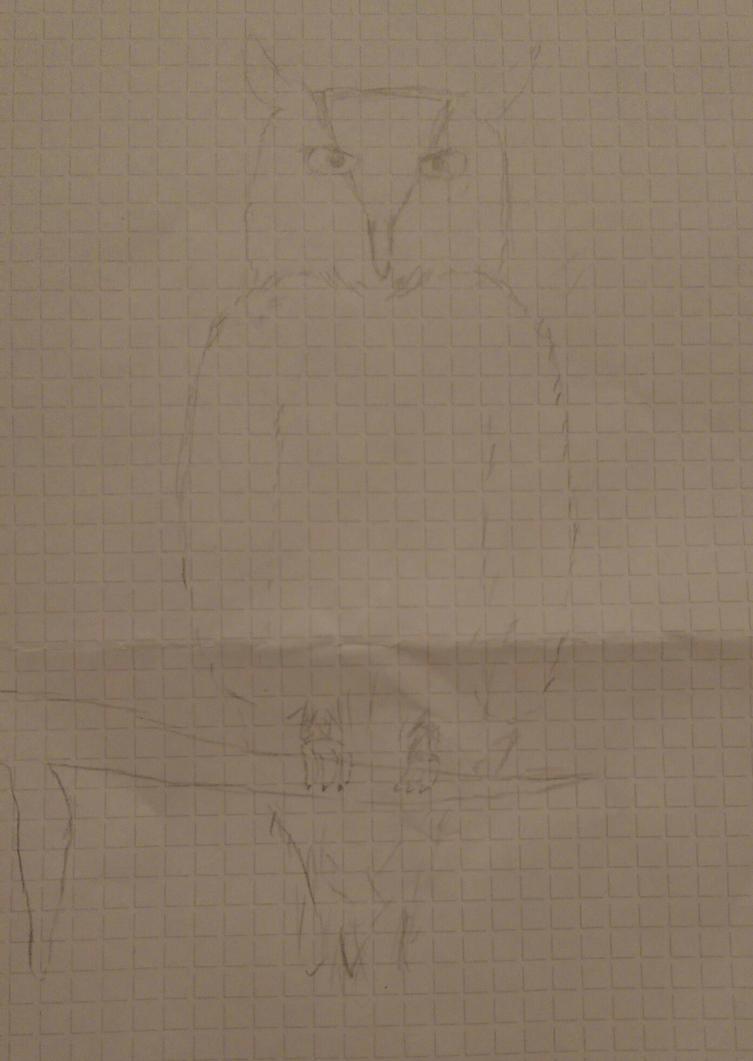 Owl sketch by Bridge2Brain