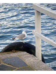 King's Gate Seagull