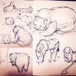 Zoo Sketches 001