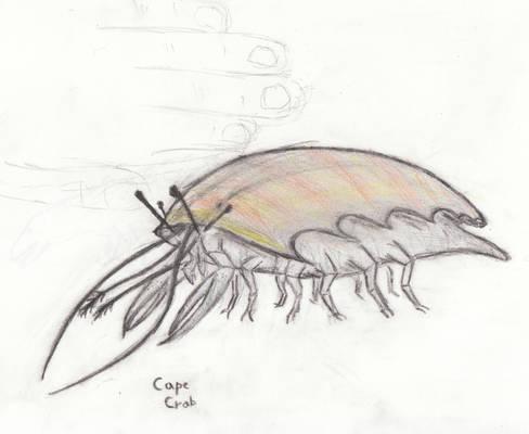 Cape Crab