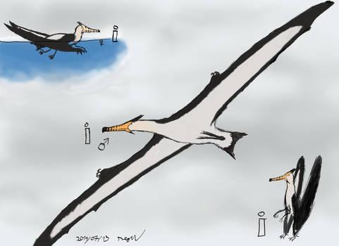 Tigerbeak Swiftlet