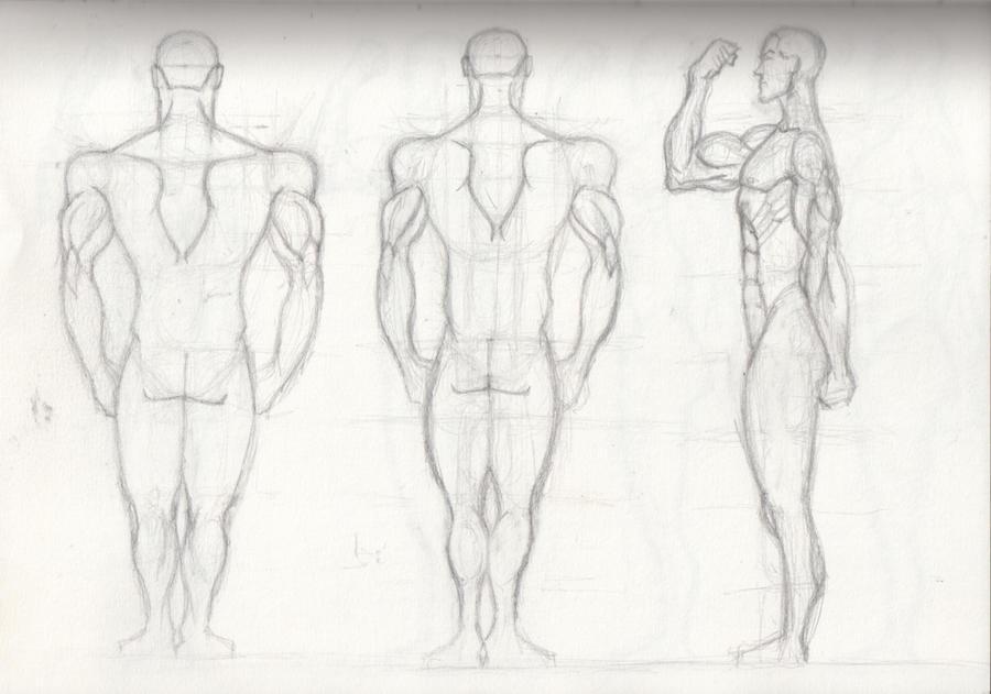 Drawing Male Anatomy Hero 4 by OLUDAYONBA on DeviantArt