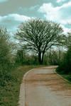 The Bend by OCWolfe