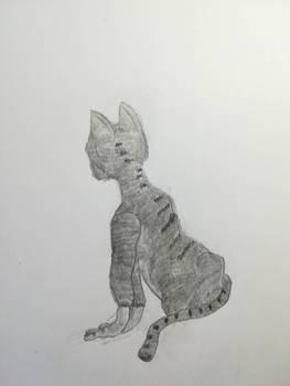 Just a cat
