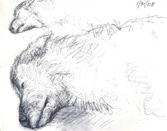 Siwa the Dog by troque