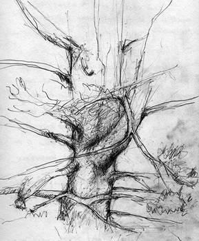 Essence of tree trunk