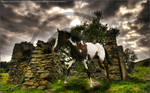 Horse Manipulation 20 - 2008