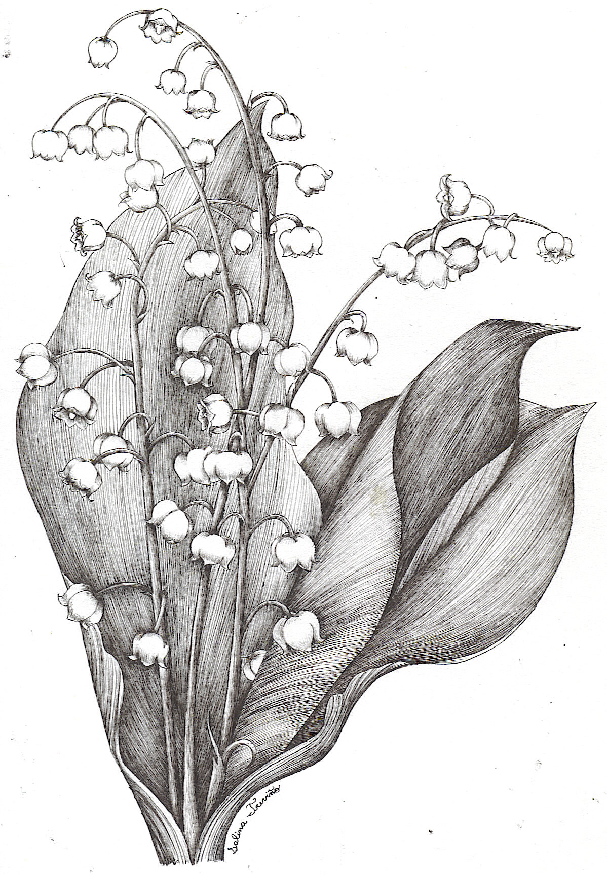 Lily Tattoo Line Drawing : Lily of the valley by moonie dreamer on deviantart