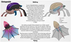 Octopoids