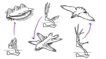 Folioptera wing sketches