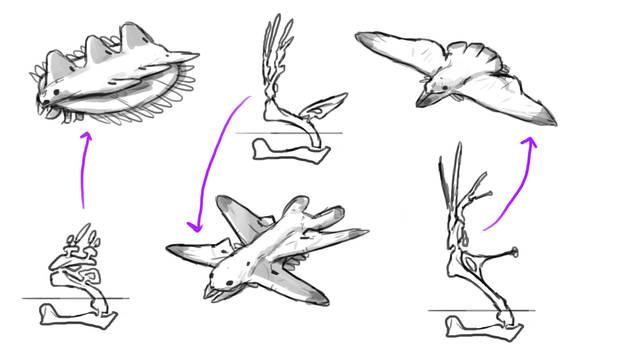 Folioptera wing sketches