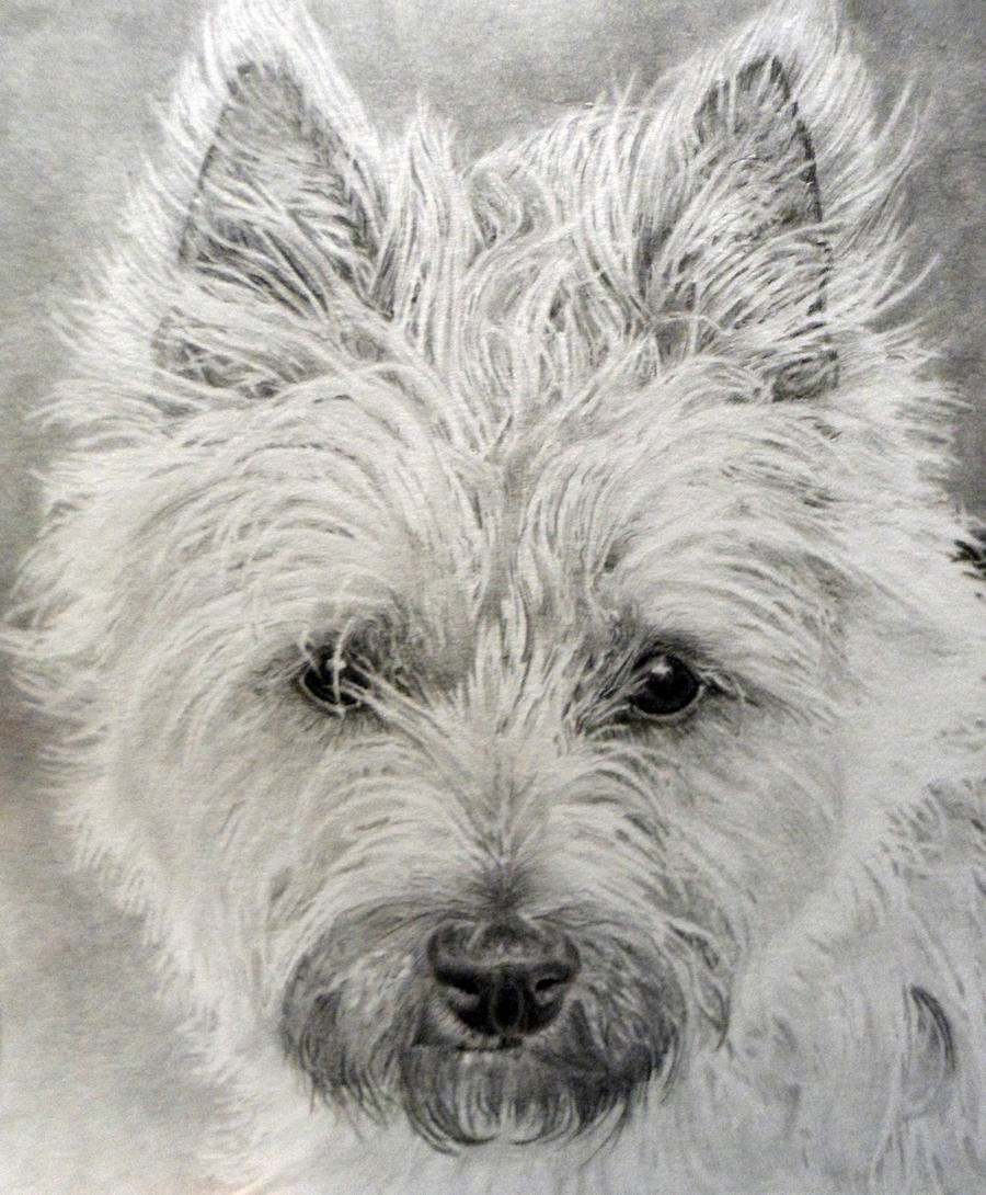 carin terrier molly by 05emort123