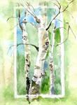 Birches-postcard
