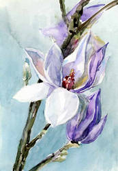 Magnolia-branch-sketch by Joinerra