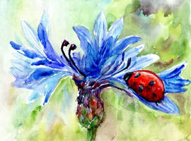 Ladybug-and-cornflower-postcard by Joinerra