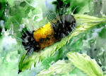 Caterpillar-postcard-format