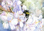 Plum-tree-branch-and-a-bee