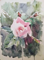 Celestines-garden-04