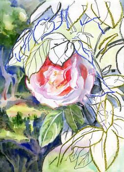 Celestines-garden-09