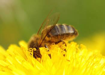 La Tete dans le Pollen by Numede