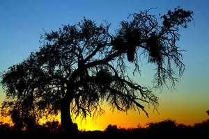 Sunset C0523 by Mammoth-Hunter