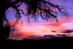 Sunset C1315