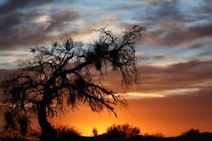 Sunset 8807 by Mammoth-Hunter