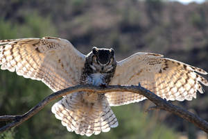 Owl 4359 by Mammoth-Hunter