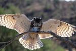 Owl 4359