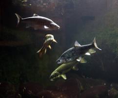 Arizona Fish 8228