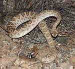 Snake 7845 by Mammoth-Hunter