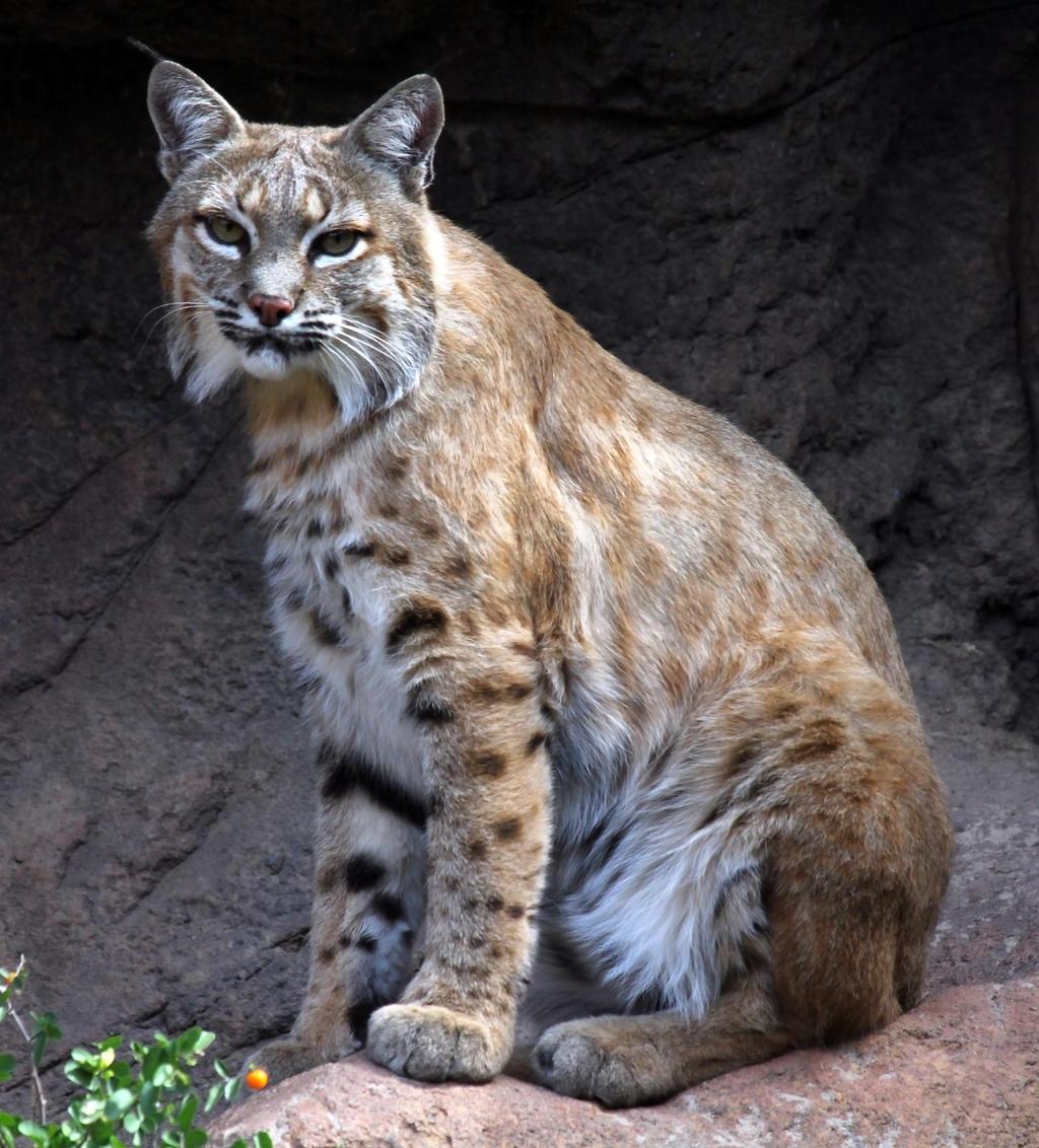 Bobcat 1785