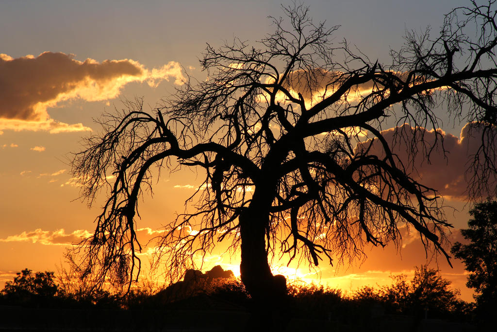 Sunset 2867 by mammothhunter