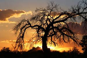Sunset 2867 by Mammoth-Hunter