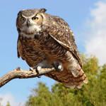 Owl 4003