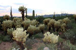 Cactus 1664 by Mammoth-Hunter