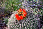 Cactus 1647 by Mammoth-Hunter