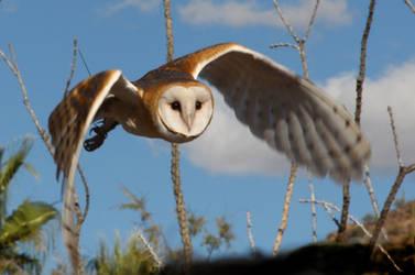 Owl 6282 by Mammoth-Hunter