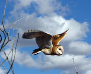 Owl 6274 by Mammoth-Hunter