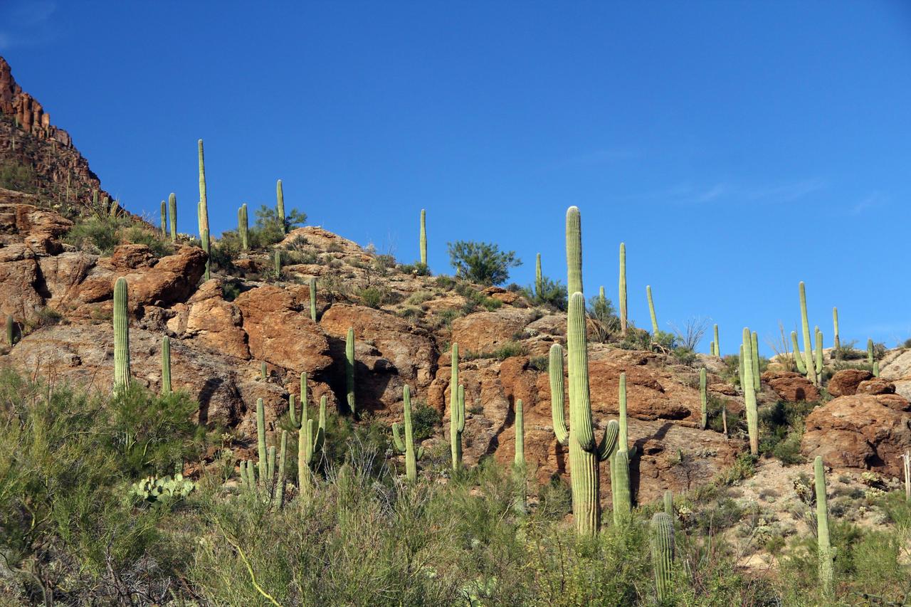 Arizona Desert 2995 by mammothhunter