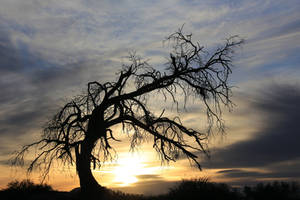 Mesquite Sunset 521