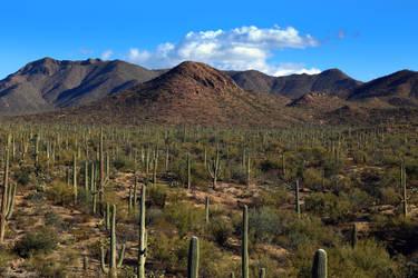Saguaro 3150 by Mammoth-Hunter