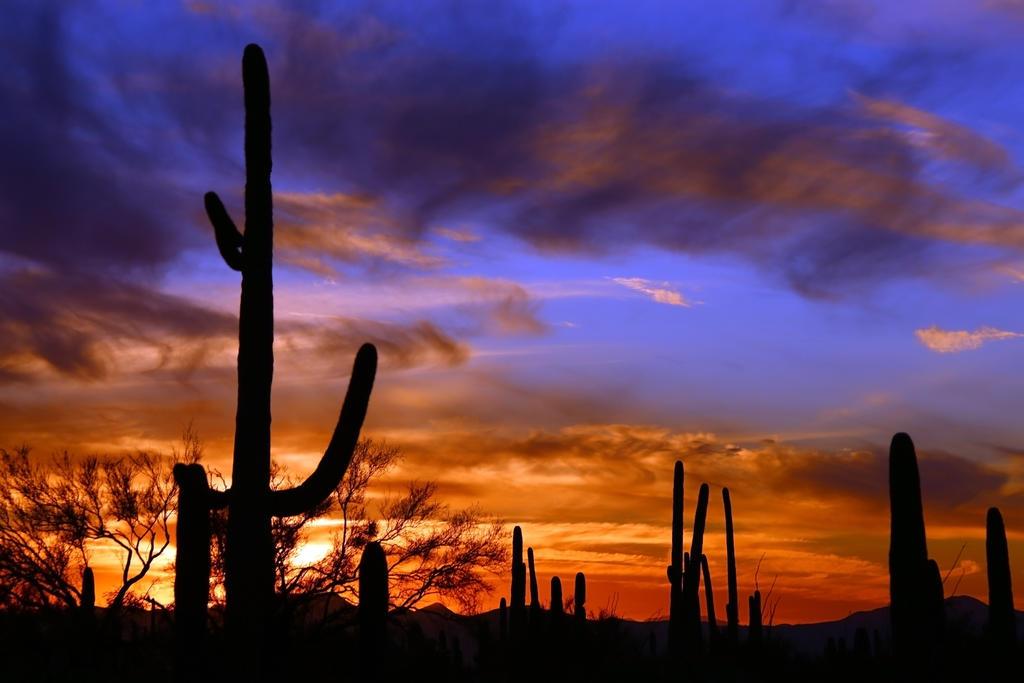 Sunset 3944 by mammothhunter