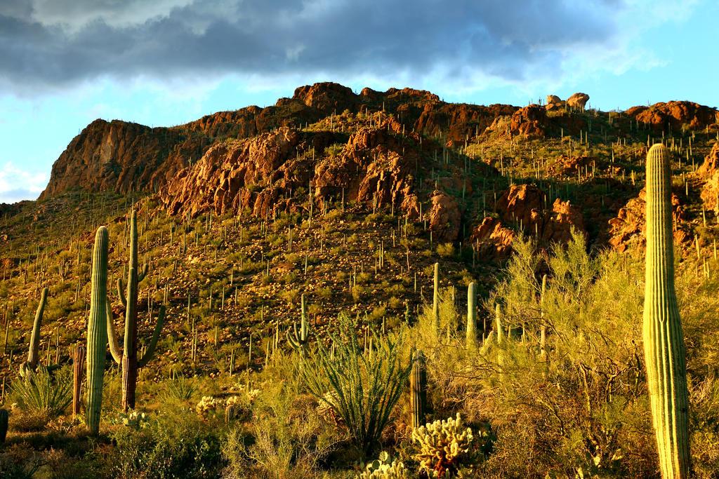 Saguaro 3272 by mammothhunter