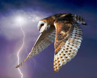 Barn Owl 1 by Mammoth-Hunter