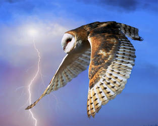 Barn Owl 2 by Mammoth-Hunter