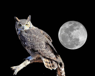 Great Horned Wol and Moon by Mammoth-Hunter