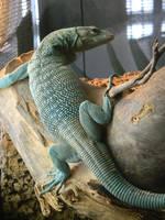 lizard 2 by yellowicous-stock