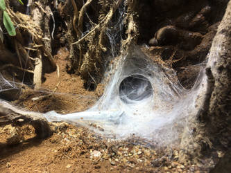 web cave 1