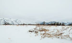 snowy countryside 2 by yellowicous-stock